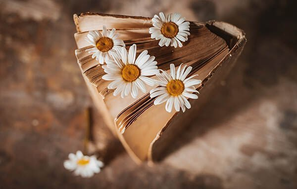 A view of a book from above with daisies popping out of the pages