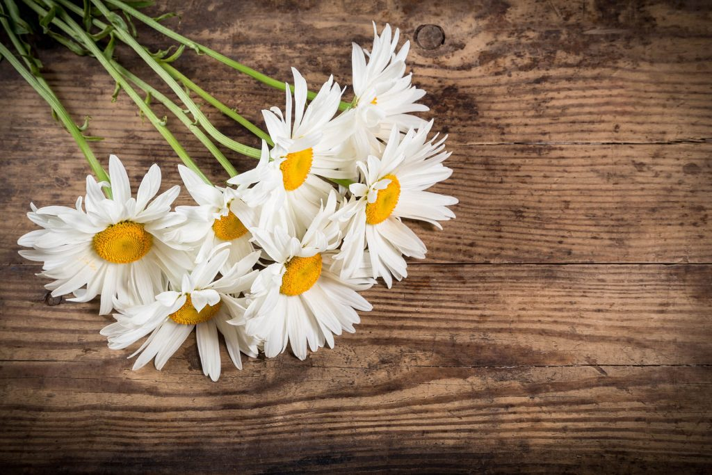 A bouquet of daisies on a wooden tabletop