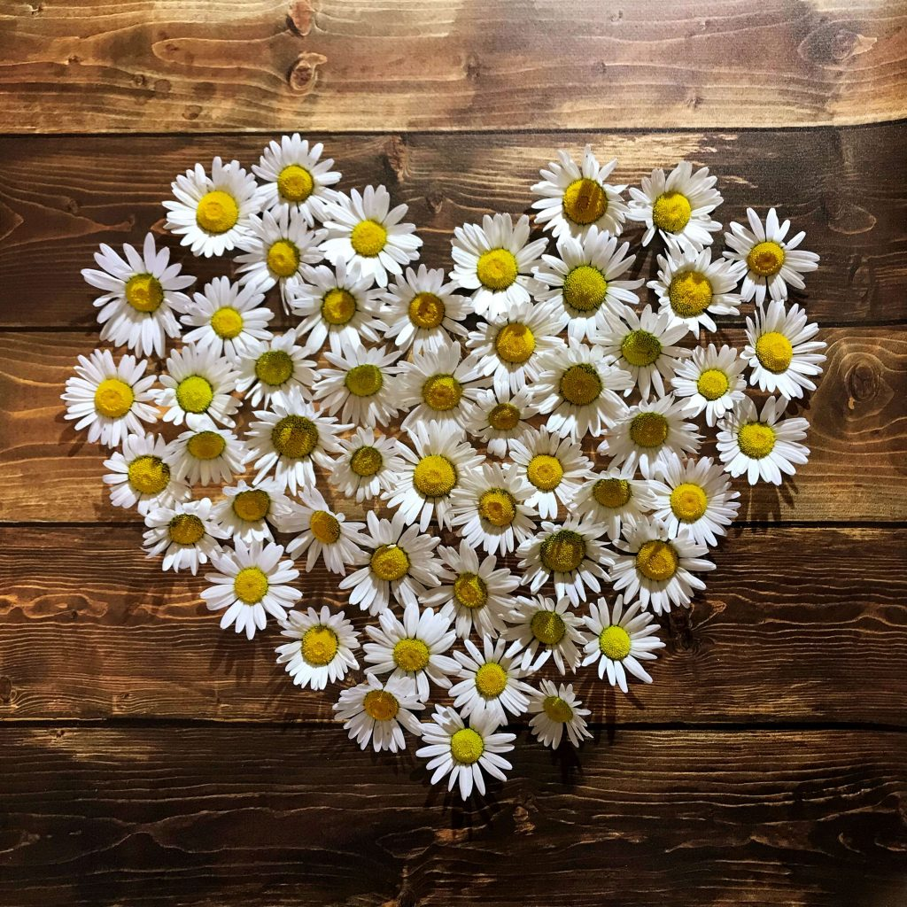 A heart made of daisies on a wood background
